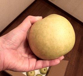 二十世紀梨の画像