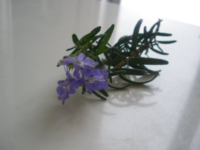 haikei_rosemary_mini