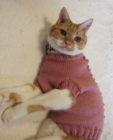 cat-sweater