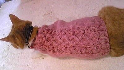 cat-sweater