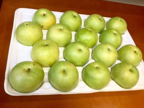 今年も二十世紀梨が届きました。鳥取県米子市ふるさと納税お礼品