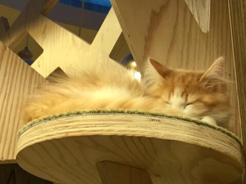 心斎橋の猫カフェMOCHAでもふもふの猫ちゃんにいやされてきたよ