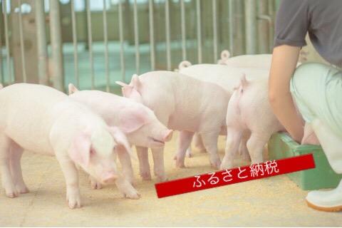 ボリューム満点の豚肉!大阪府泉佐野市へのふるさと納税で三元豚2500gをもらいました