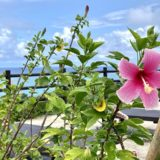 THIRD石垣島のオールインクルーシブステイと美しい海を楽しむ。3泊4日石垣島旅行記(後編)