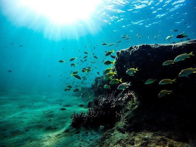 海の中のサンゴと魚